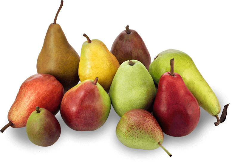 ADULTS WHO EAT PEARS LESS LIKELY TO BE OBESE